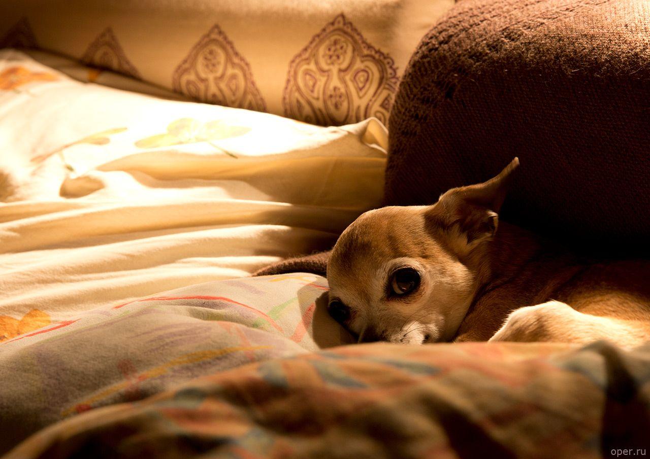 Картинки по запросу гоблин и его собака | Собаки