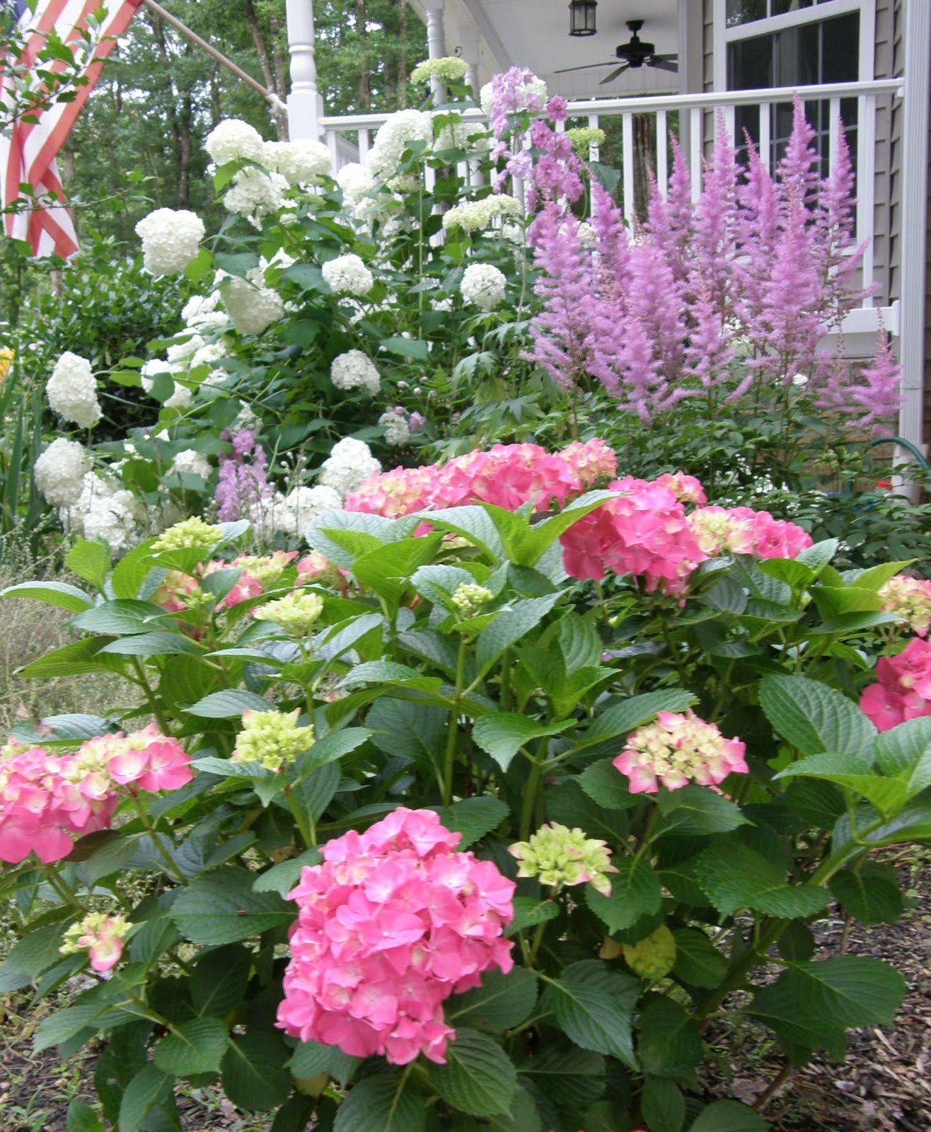 Forever Pink Hydrangeas  MY  FLOWERS  PREFERIDAS,,,,,,LOVE  GARDEN ,,,**+