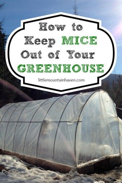 Deter mice out of the greenhouse garden gardening sow what pinterest mice gardens and for How to keep mice out of garden