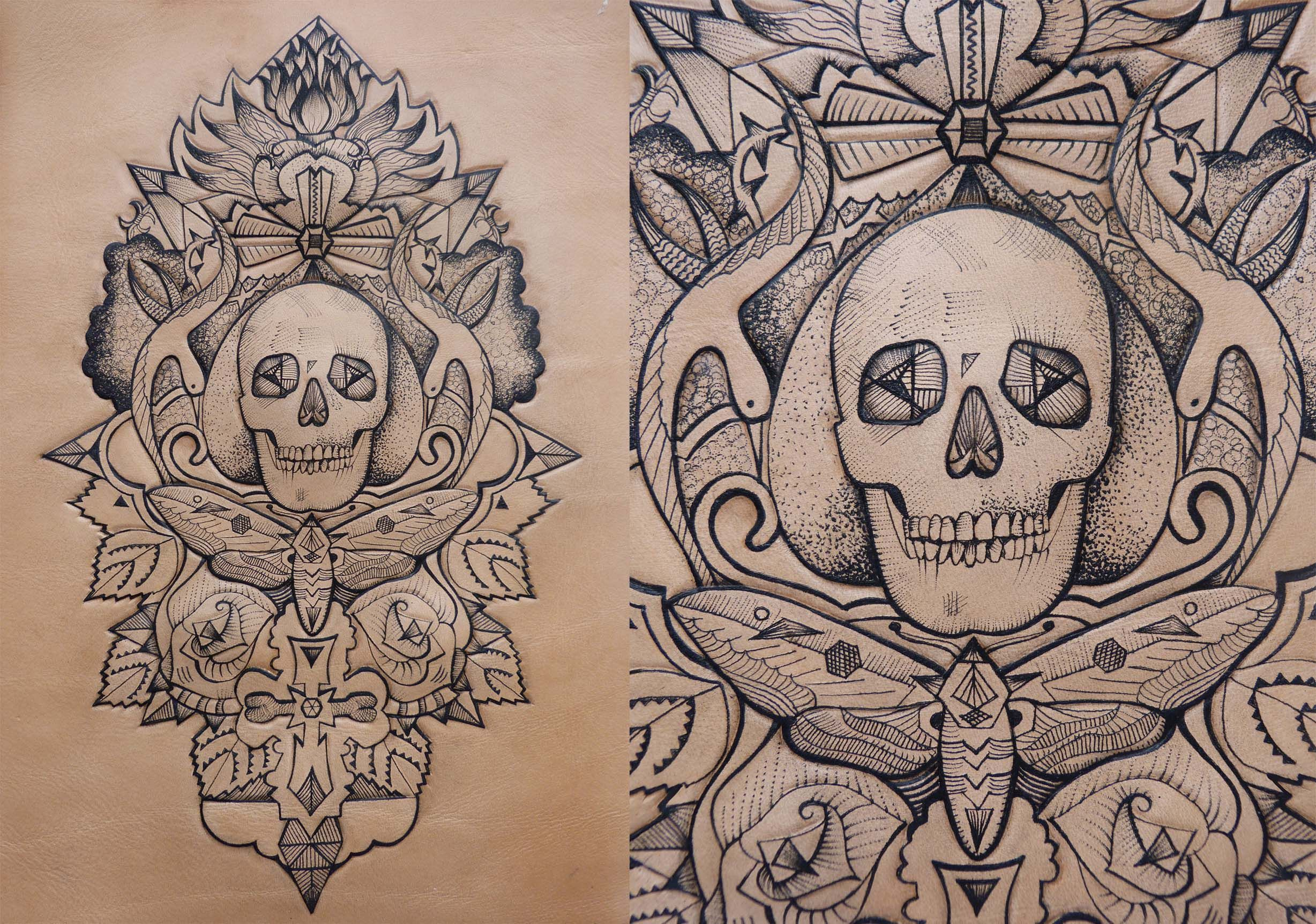 Skull and moth compsition
