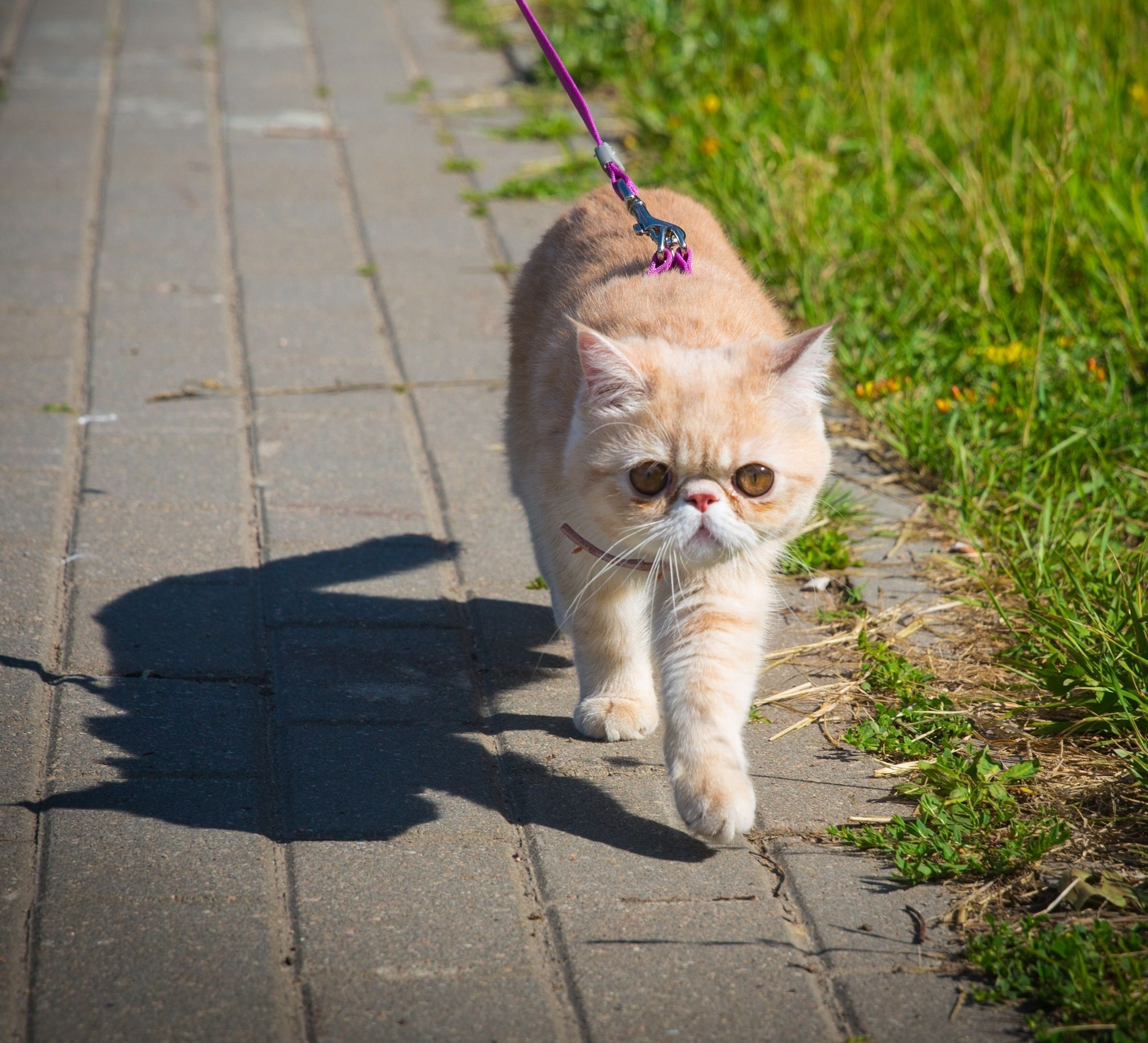 Take In These Great Cat Care Tips Cat leash, Cat