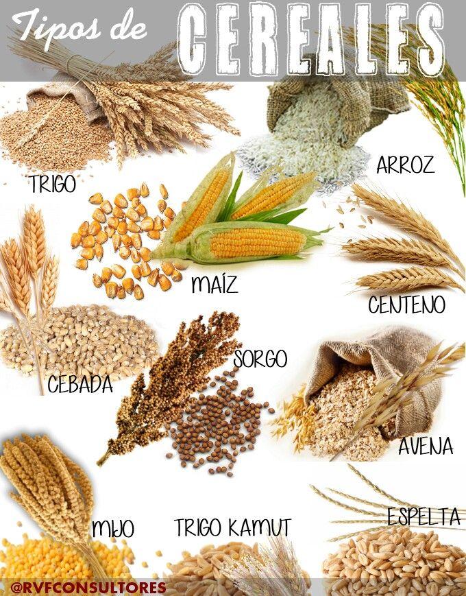 Pin De Katerine Rodarie En Cereales Granos Legumbres Y Sus Harinas Tipos De Legumbres Imagenes De Alimentos Saludables Tipos De Cereales