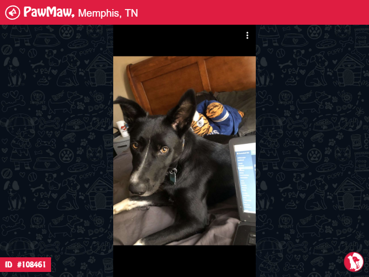 Diamond A Female Dog Lost In Memphis Tn Pets Lost Cat Pet Owners