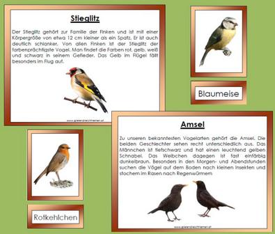 Heimische Vogel Unterrichtsmaterial Im Fach Sachunterricht Heimische Vogel Vogel Vogel Im Winter