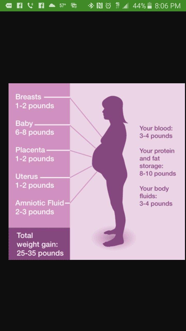 Weight Gain During Twin Pregnancy Chart Driveeapusedmotorhomefo