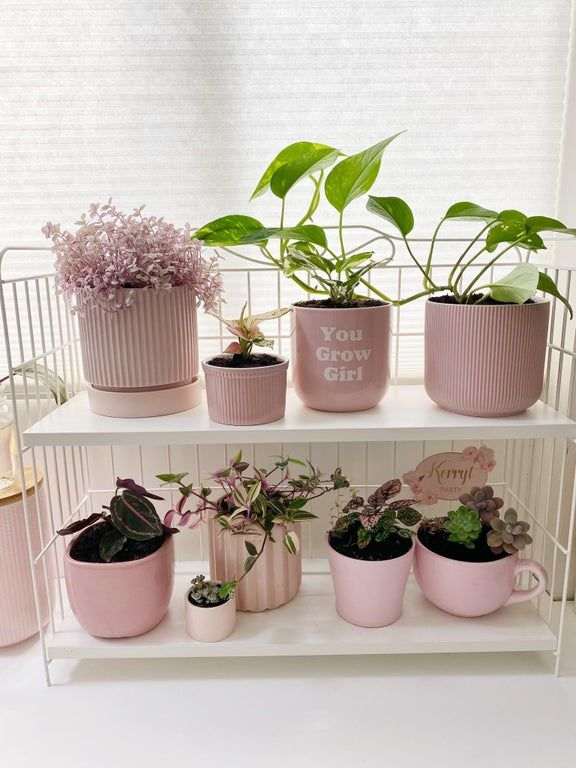 My plants collecting pink plants 💖