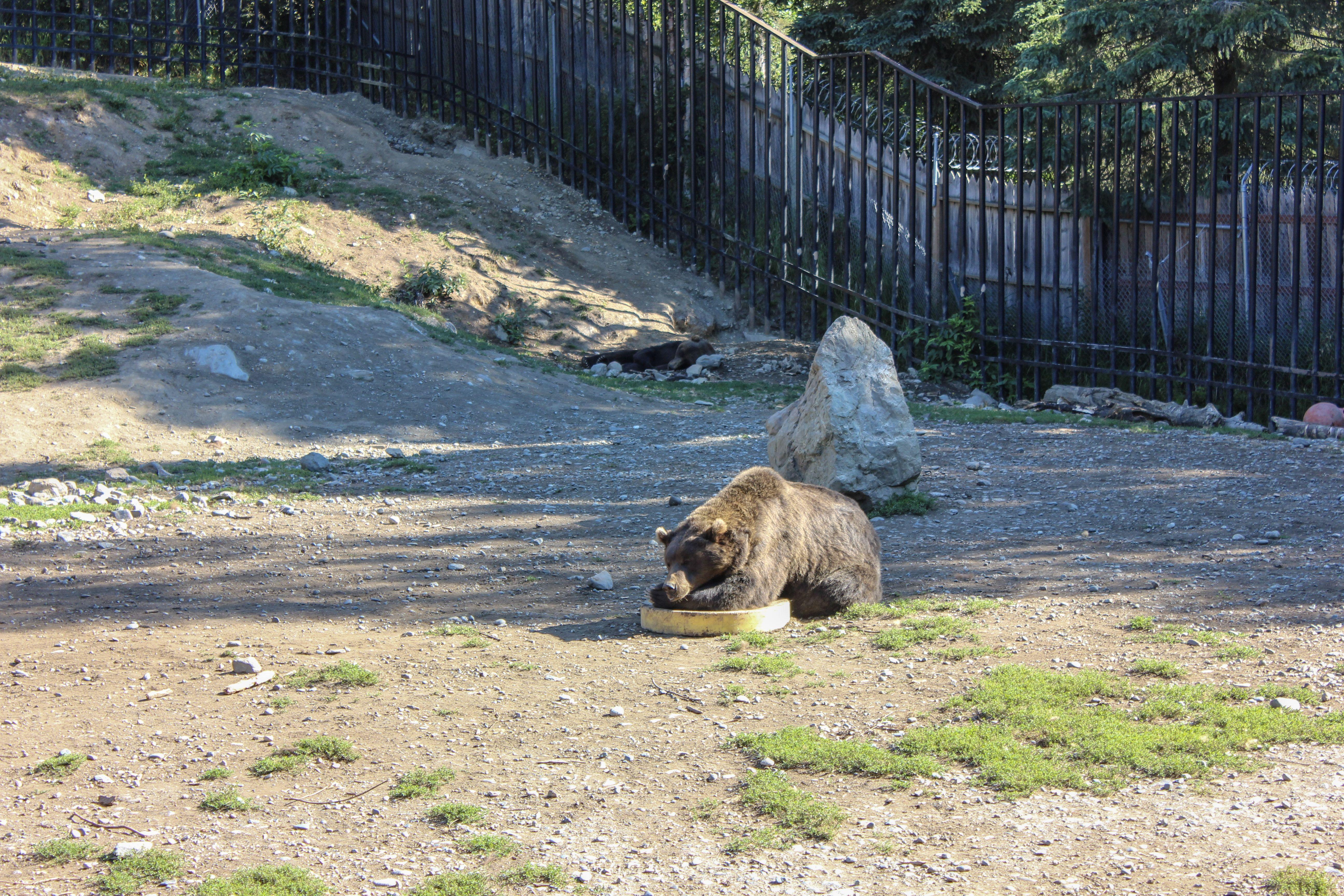 Alaska Zoo Alaska, Our adventure book, Kenai fjords