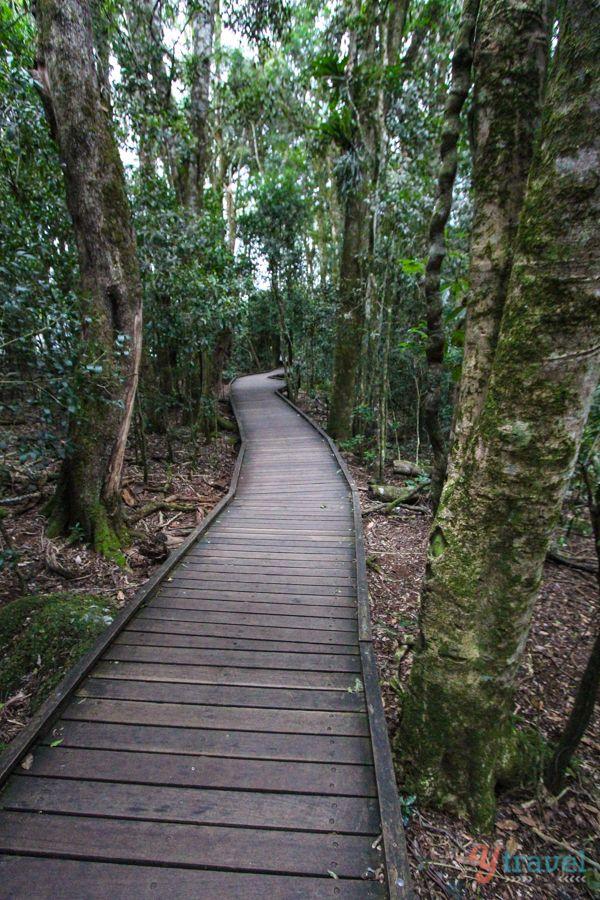 4 Fantastic Gold Coast Walks for Natural Beauty