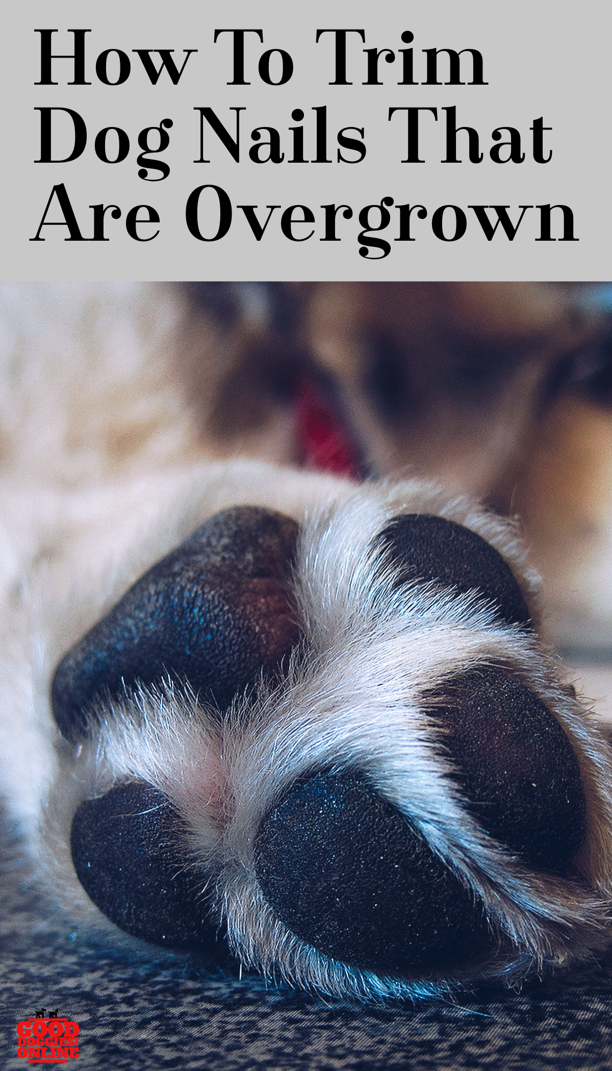 How To Trim Dog Nails That Are Overgrown Trimming Dog Nails Dog Nails Dog Remedies