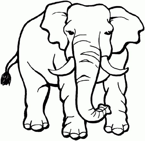 elephant african safari elephant coloring page coloring pages for kids animal coloring pages. Black Bedroom Furniture Sets. Home Design Ideas