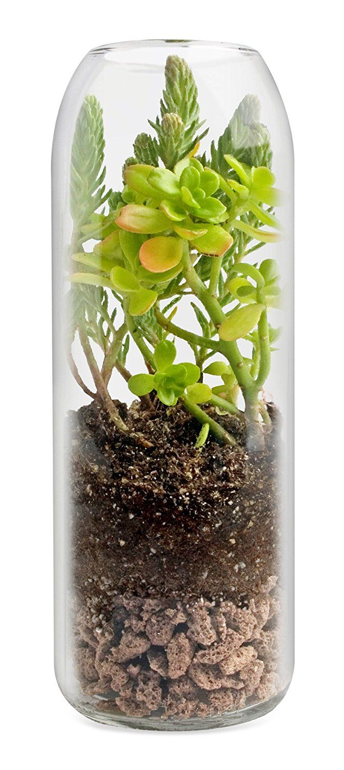 Amazonsmile terrarium wine bottlevertical sedum patio lawn