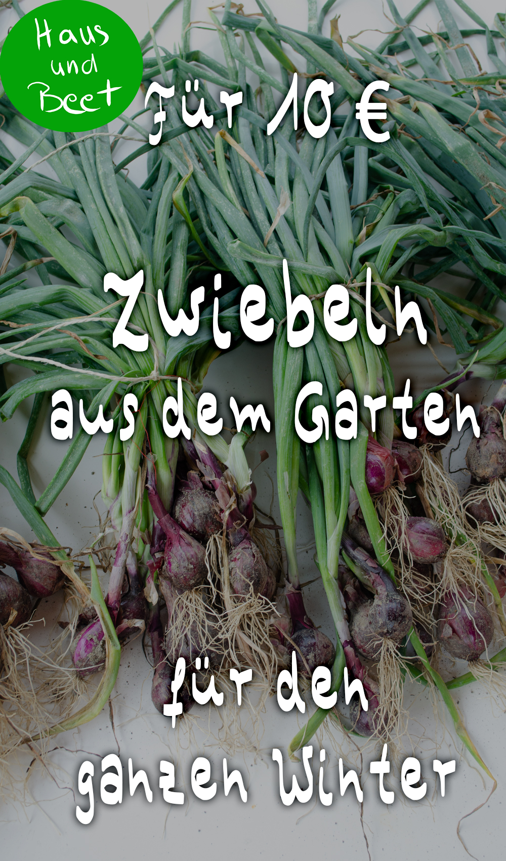 Zwiebel Anbauen Schritt Fur Schritt Anleitung Haus Und Beet Zwiebel Pflanzen Gemusegarten Anlegen Gemusebeet