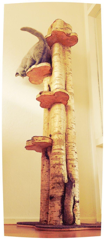 ein nat rlicher kratzbaum ganz einfach auch zum selbstbauen cats katzen kratzbaum und. Black Bedroom Furniture Sets. Home Design Ideas