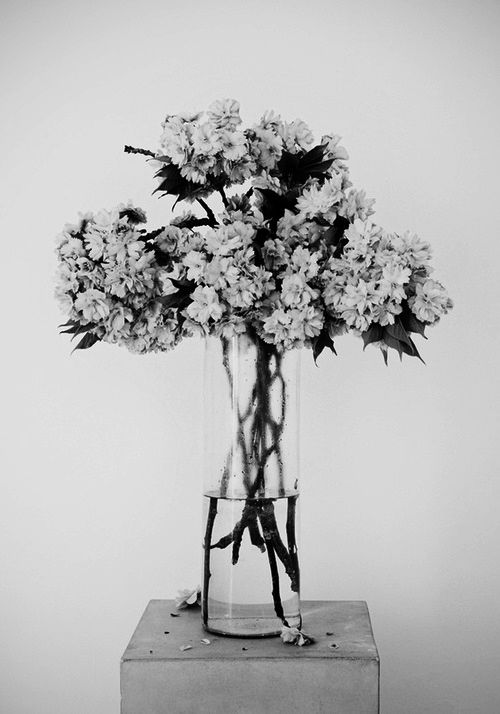Creative to shoot flowers in black white