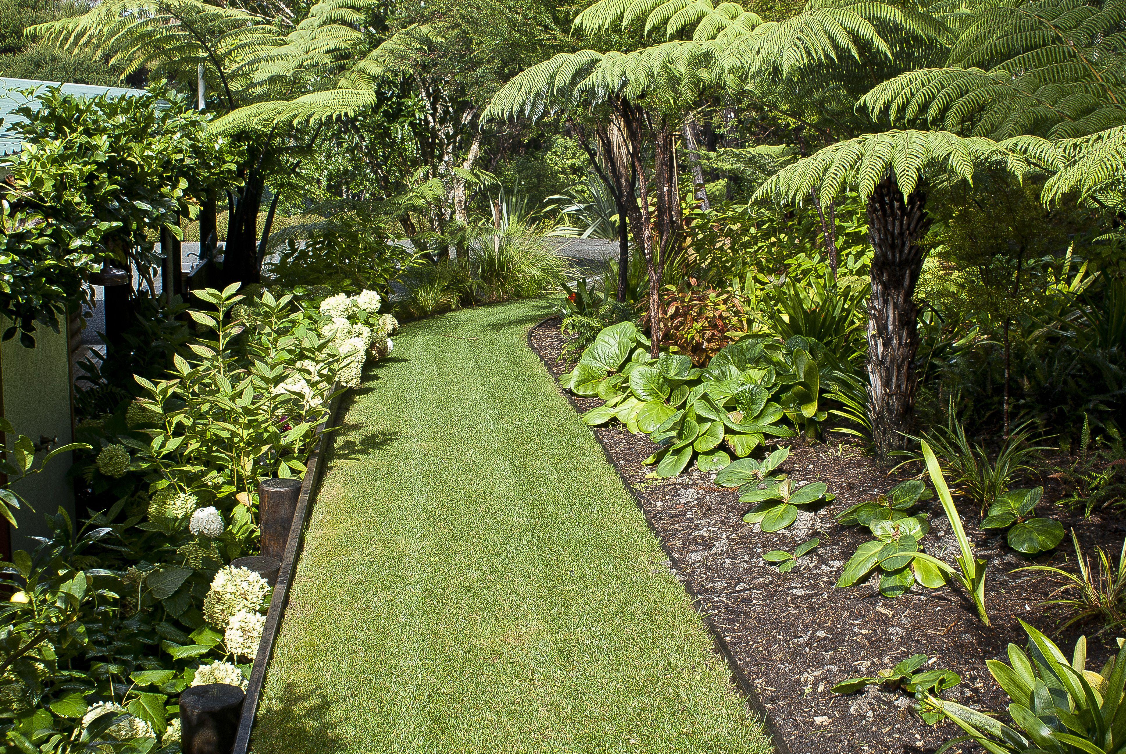 Grass Pathway Lined By Tree Ferns And Clivia At Omaio Garden Matakana New Zealand Paisajismo Canteros Campo