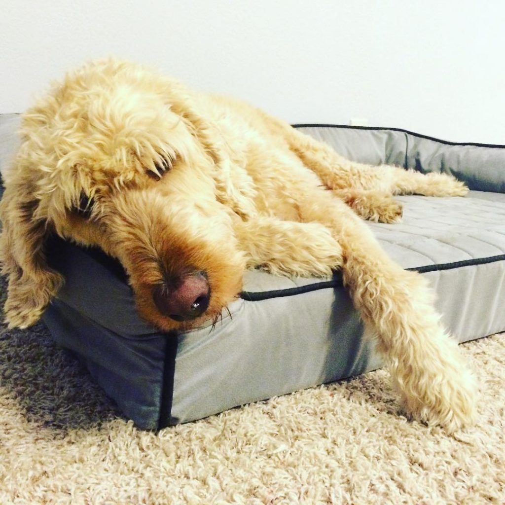Buddyrest Dog Bed Review A Good Supportive Ortho Dog Bed Dog Bed Dogs Dog Essentials