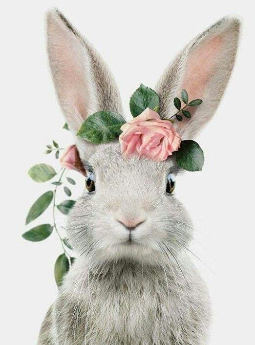Süs Tavşanı
