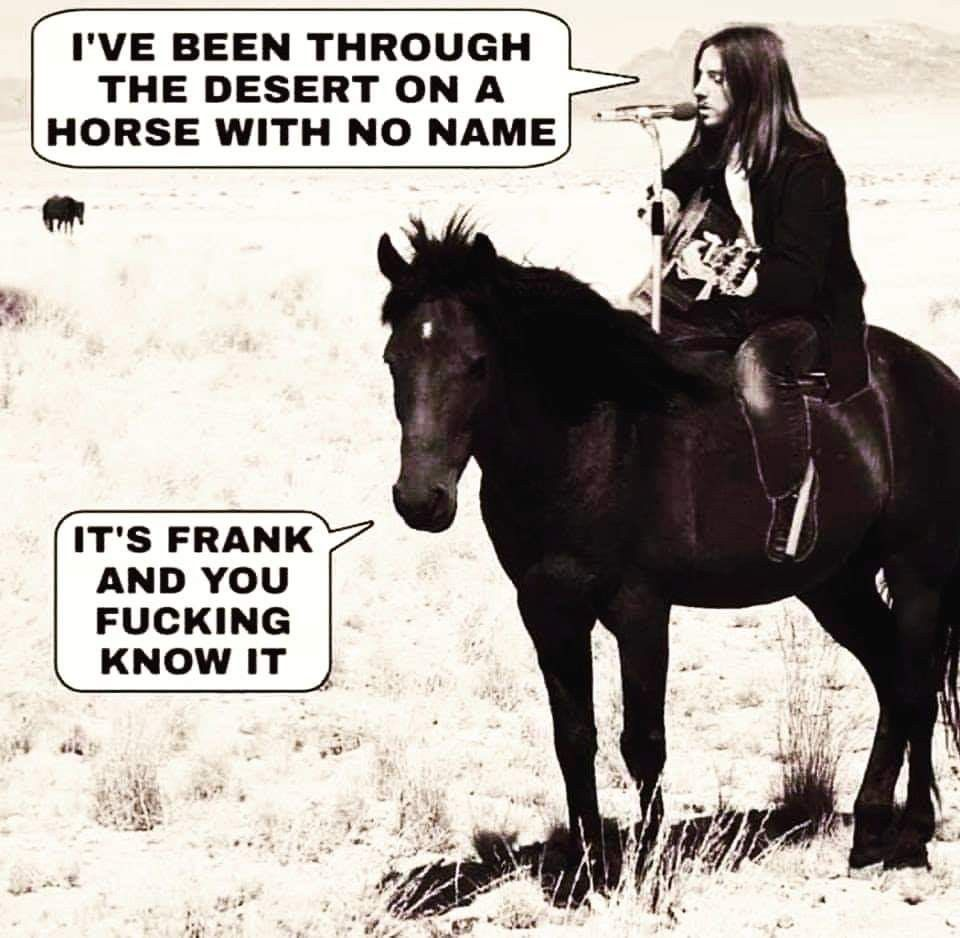 Pin by Jillian Hanson on Made me Laugh in 2020 Horses