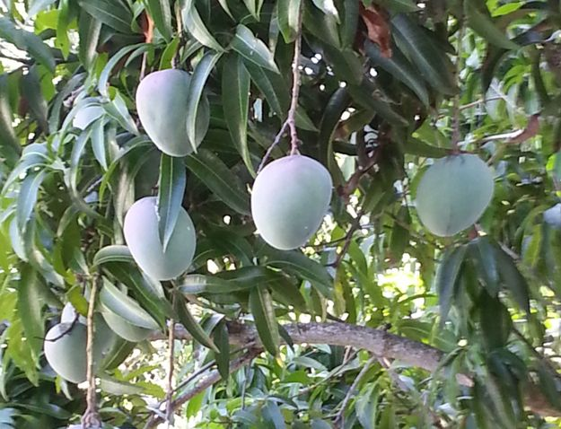 Pin On Fruit Tree Nursery Miami
