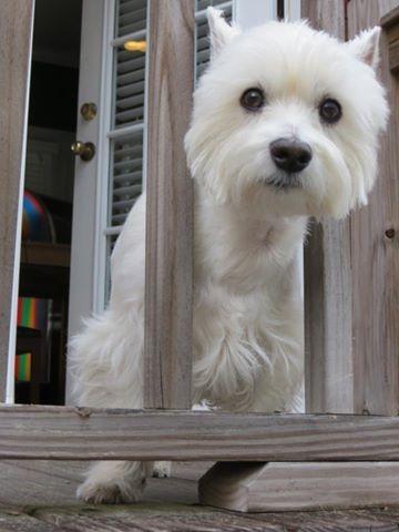 Milo peeking through the fence!