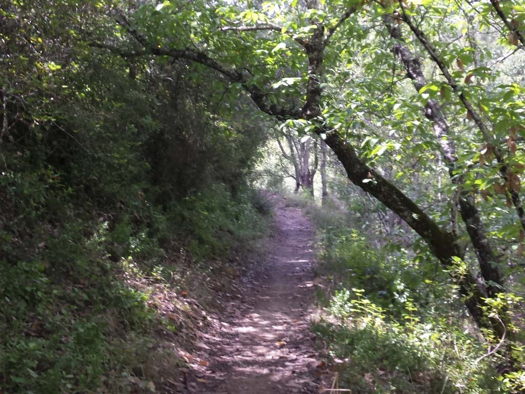 Sierra De Aracena Andalusía Guided Tours Parques Naturales Sierra España