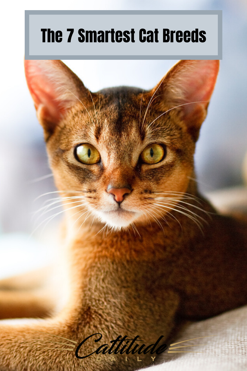 The Seven Smartest Cat Breeds In 2020 Cat Breeds All Cat Breeds Cat Facts