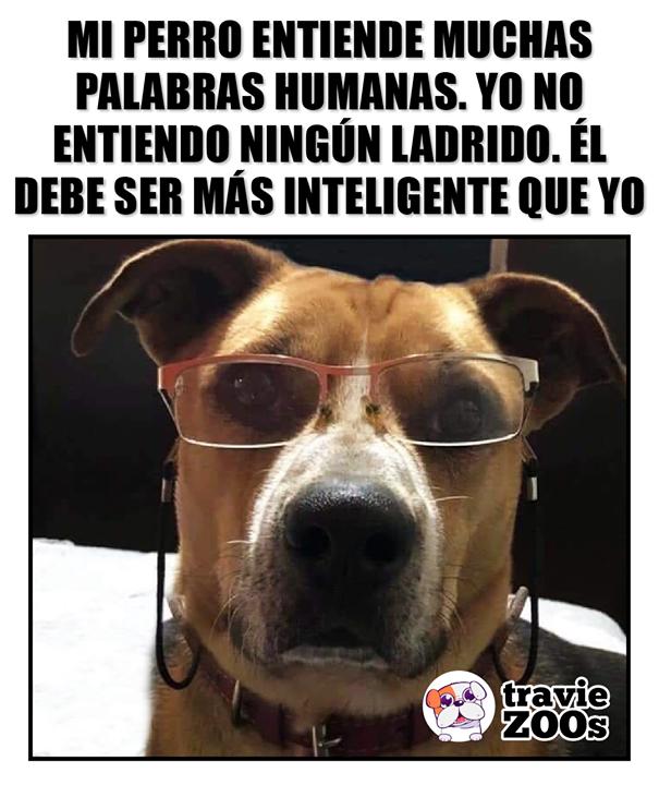 No Encuentro Falla En Esta Logica Memes Perros Perros Memes
