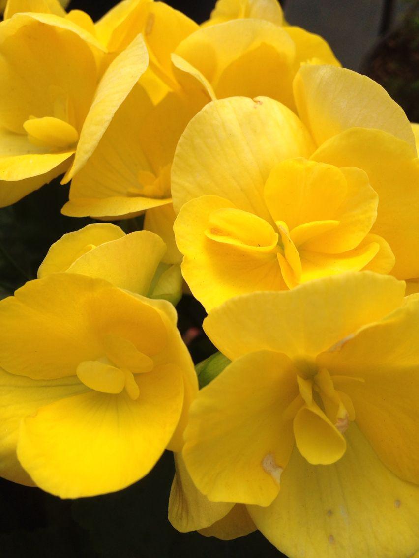 Yellow beauty pinterest