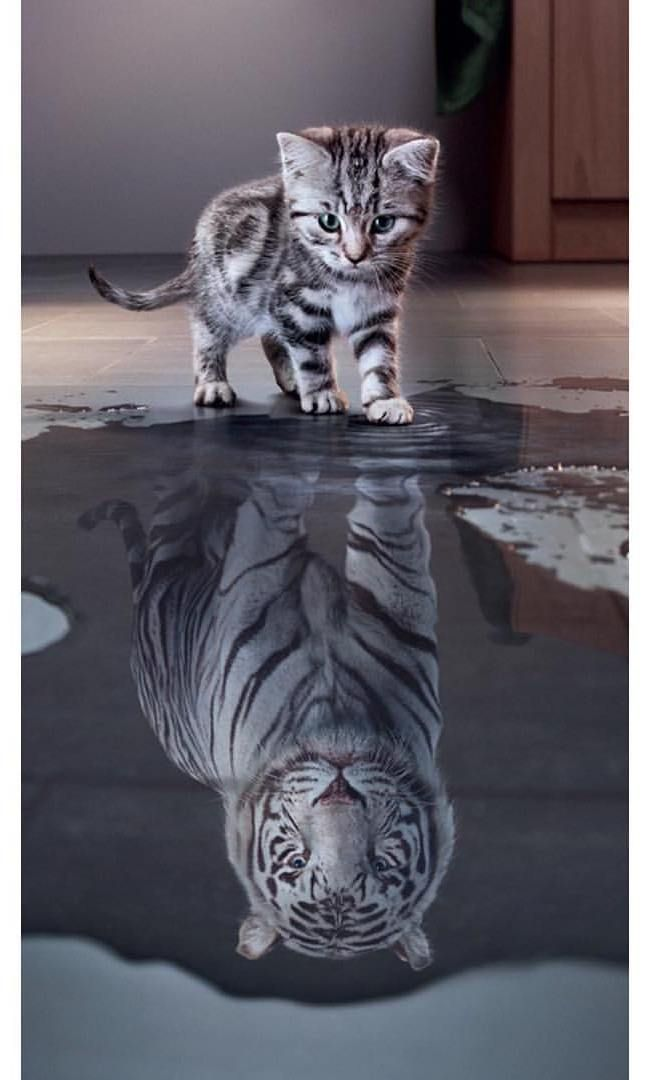 Yui Aragaki Bio Net Worth Age Height Husband Instagram Animals Beautiful Cute Cats Cute Animal Drawings