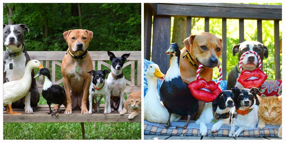 This Couple Rescued 7 Animals and Now They're One Big