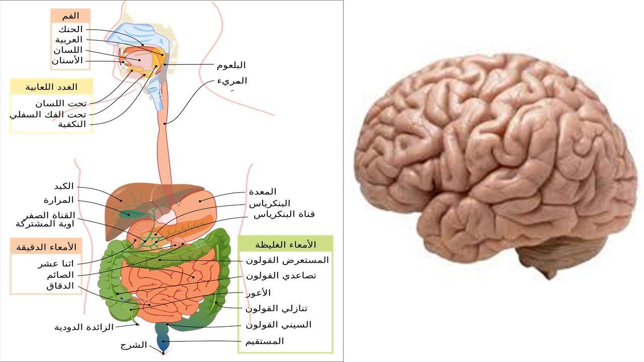 أين دماغك الثانية Uji Map