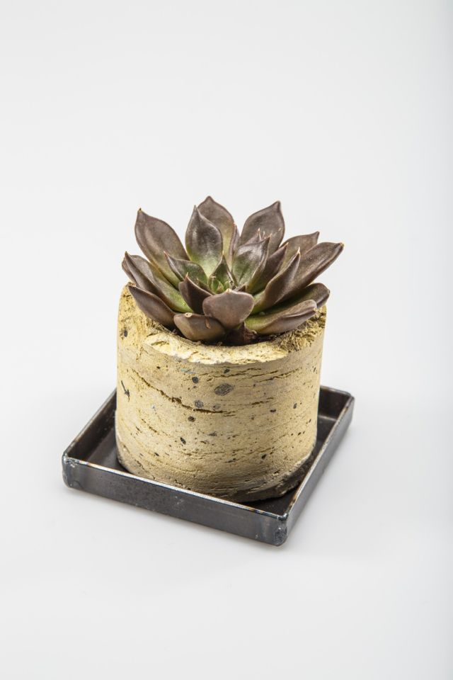 Cream City Brick Core Made Into A Planter With Steel Drip Tray And