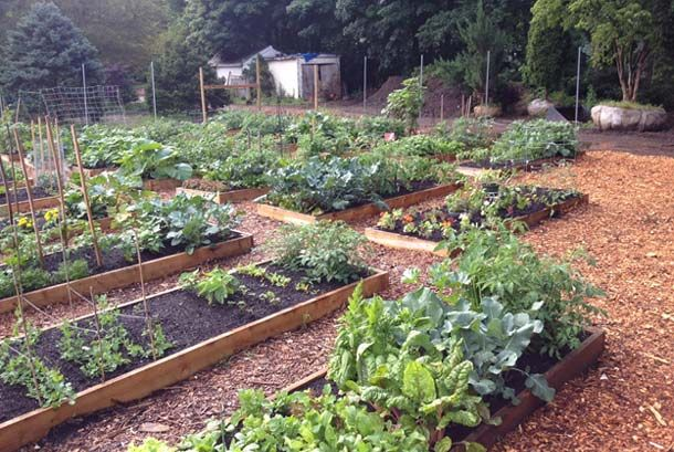 Community Garden Ideas community gardens my colorado garden and garden ideas pinterest Awesome Community Garden Project Want To Copy This In Our Backyard