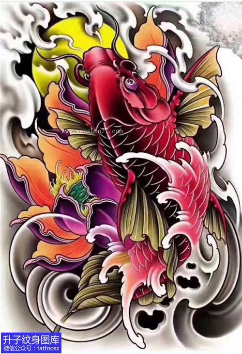 彩色鲤鱼荷花纹身手稿图案图片『升子纹身』