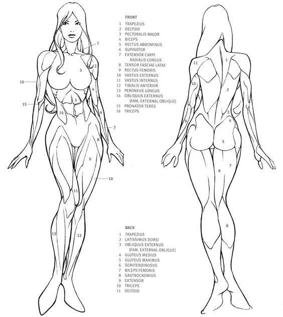 Image result for female body template templates Anatomy drawing
