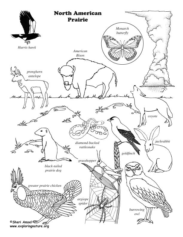 North America Desert Animals Coloring Coloring Pages Animal Coloring Pages