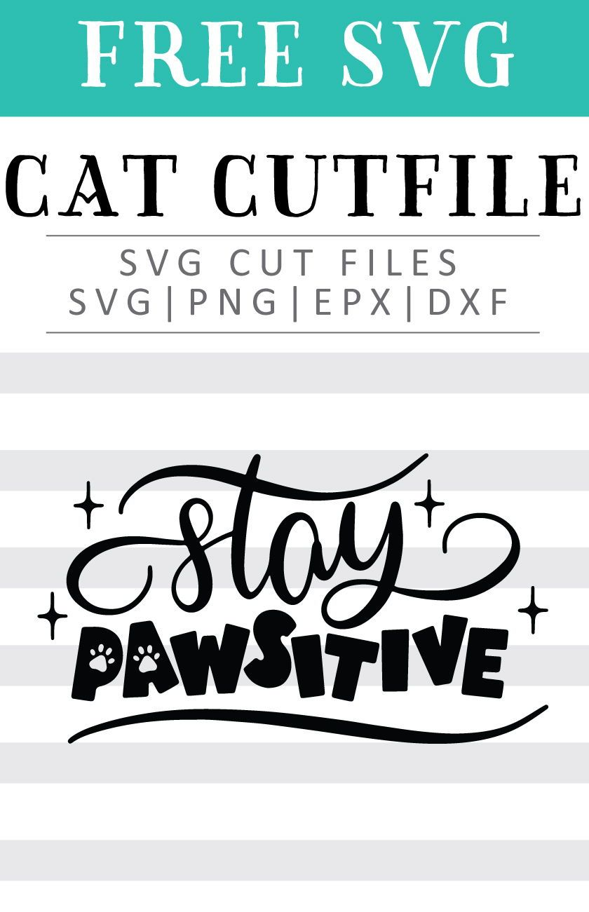 Free Stay Pawsitive SVG, PNG, EPS & DXF by   Personalized