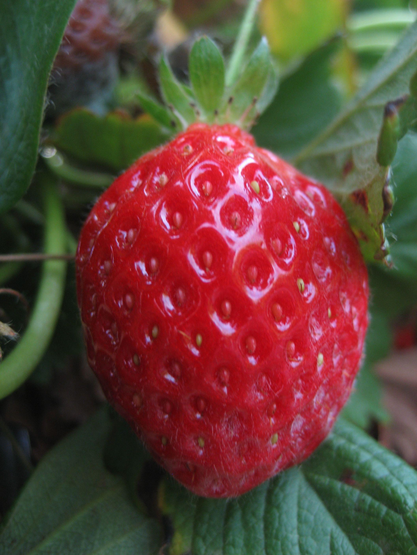 Why Choose California Strawberries? - California
