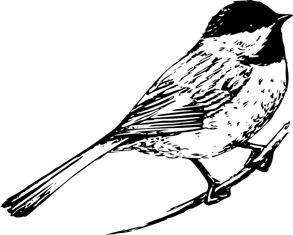 Line Drawing Quail : Black and white pictures of birds bird clip art vector