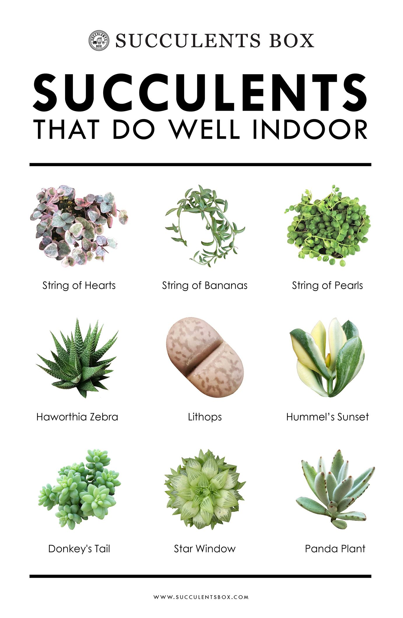 10 Types Of Succulents That Do Well Indoor Plants Low