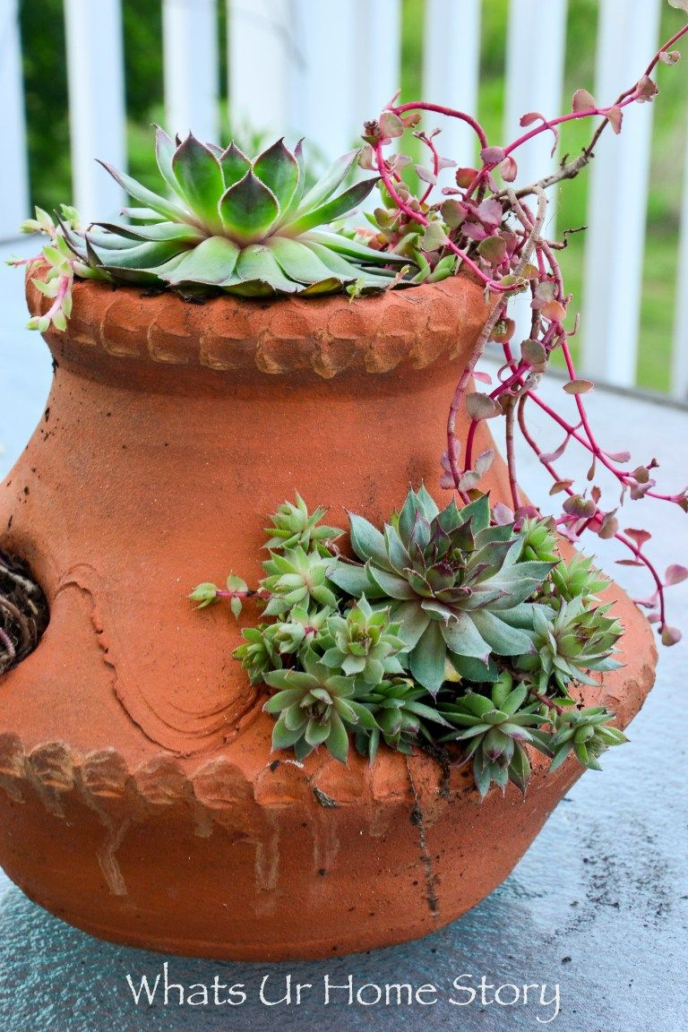 Small Of Fairy Garden Containers Ideas