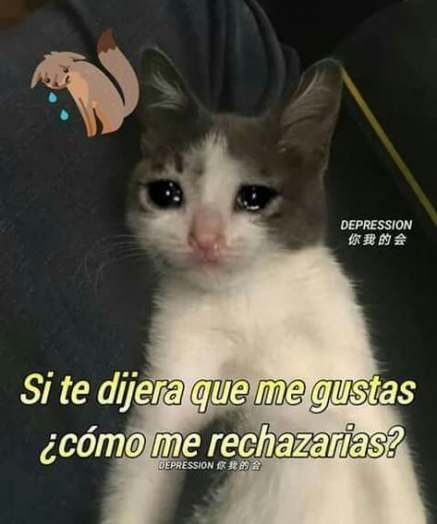 Pin De Cush En Cute Funny Everything En 2020 Memes Divertidos