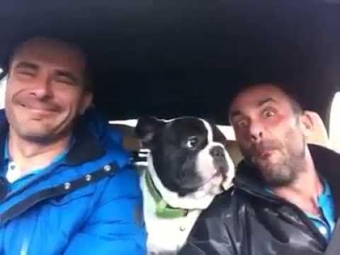 Dog Sing You Raise Me Up Long Version Bulldog Cute French