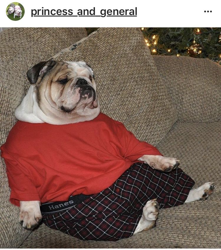 English Bulldog Shirt Order Here Https Www Sunfrog Com Johnyd Bulldog Socute English Bulldog Funny Bulldog Funny Cute Cats And Dogs
