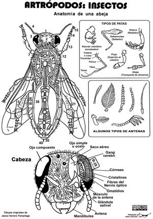Recorta Les Anatomía Invertebrados Anatomía De Animales Insectos
