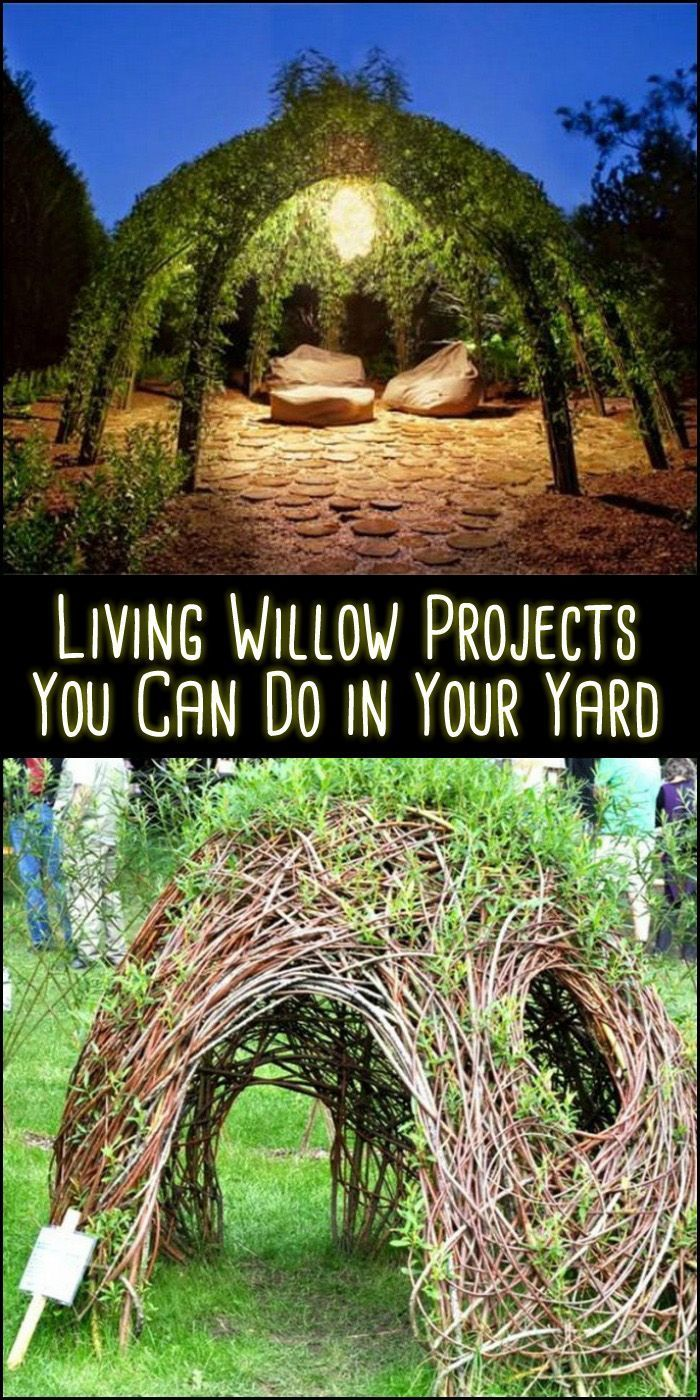 Living outdoor willow structures you can grow in your backyard – Willow garden