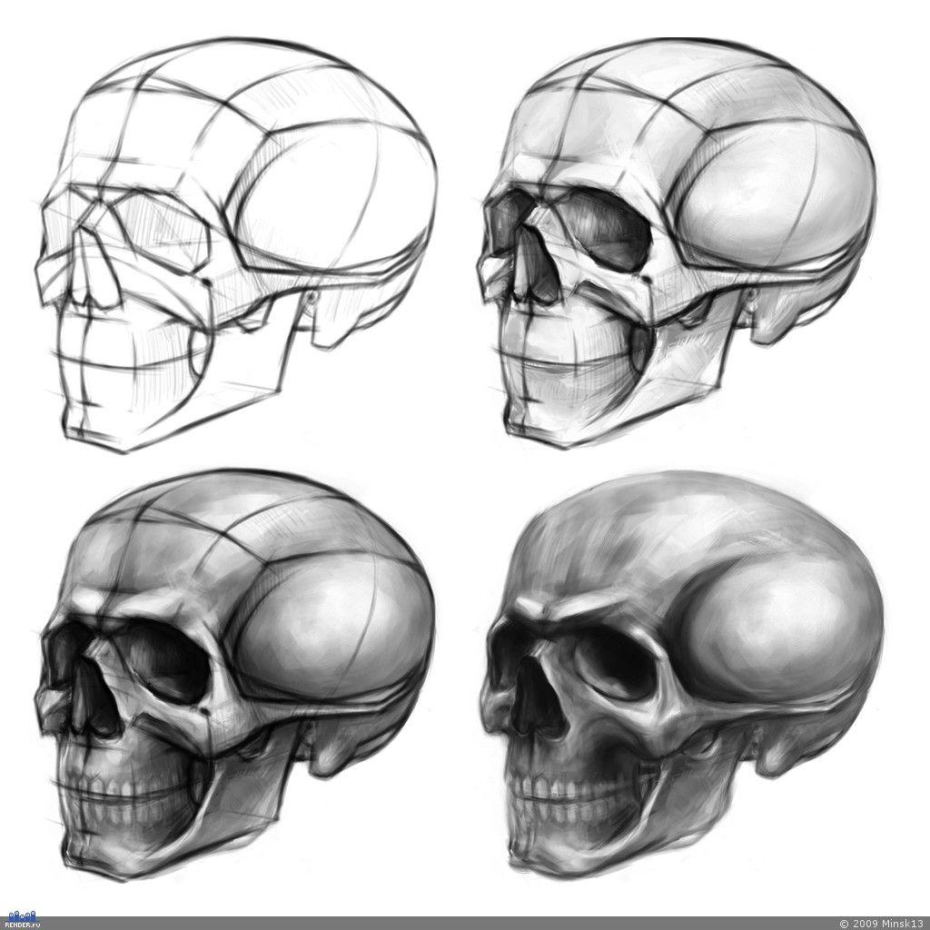 череп построение рисунок - Поиск в Google | рисунок голова ...