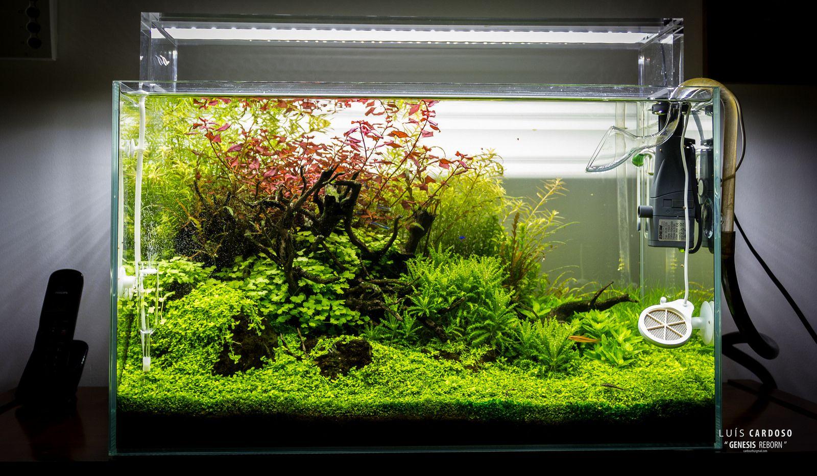 Img 0451 Aquarium Und Nano Cube