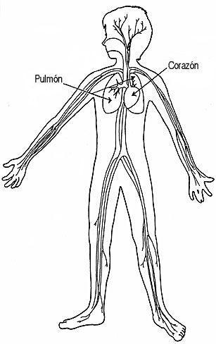 Las partes del cuerpo humano para niños | cuerpo humano | Pinterest ...