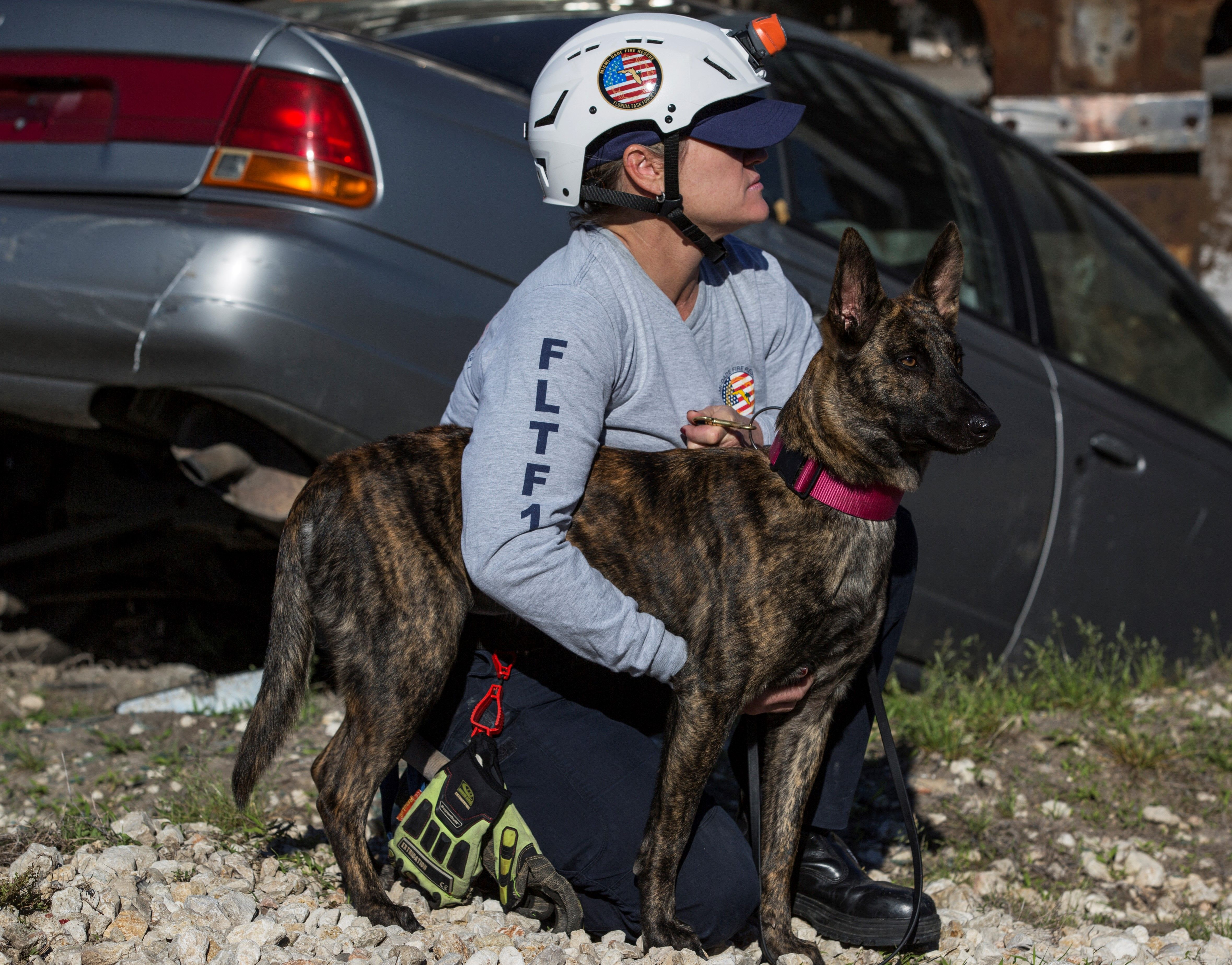 Halo And Her Human Partner Fire Captain Cat Labrada Of Miami